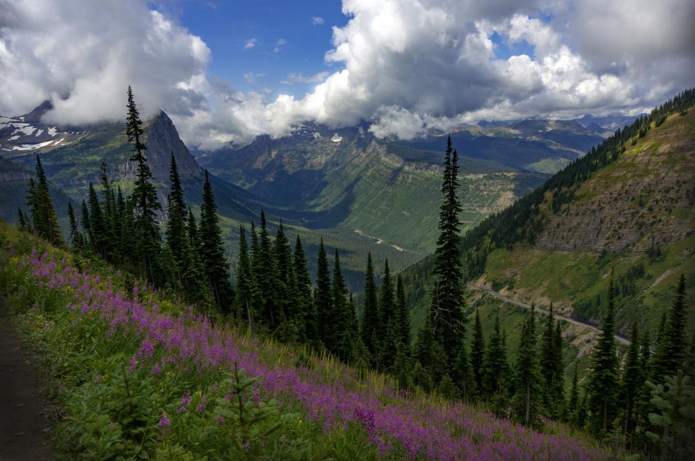 Les fleurs de montagne