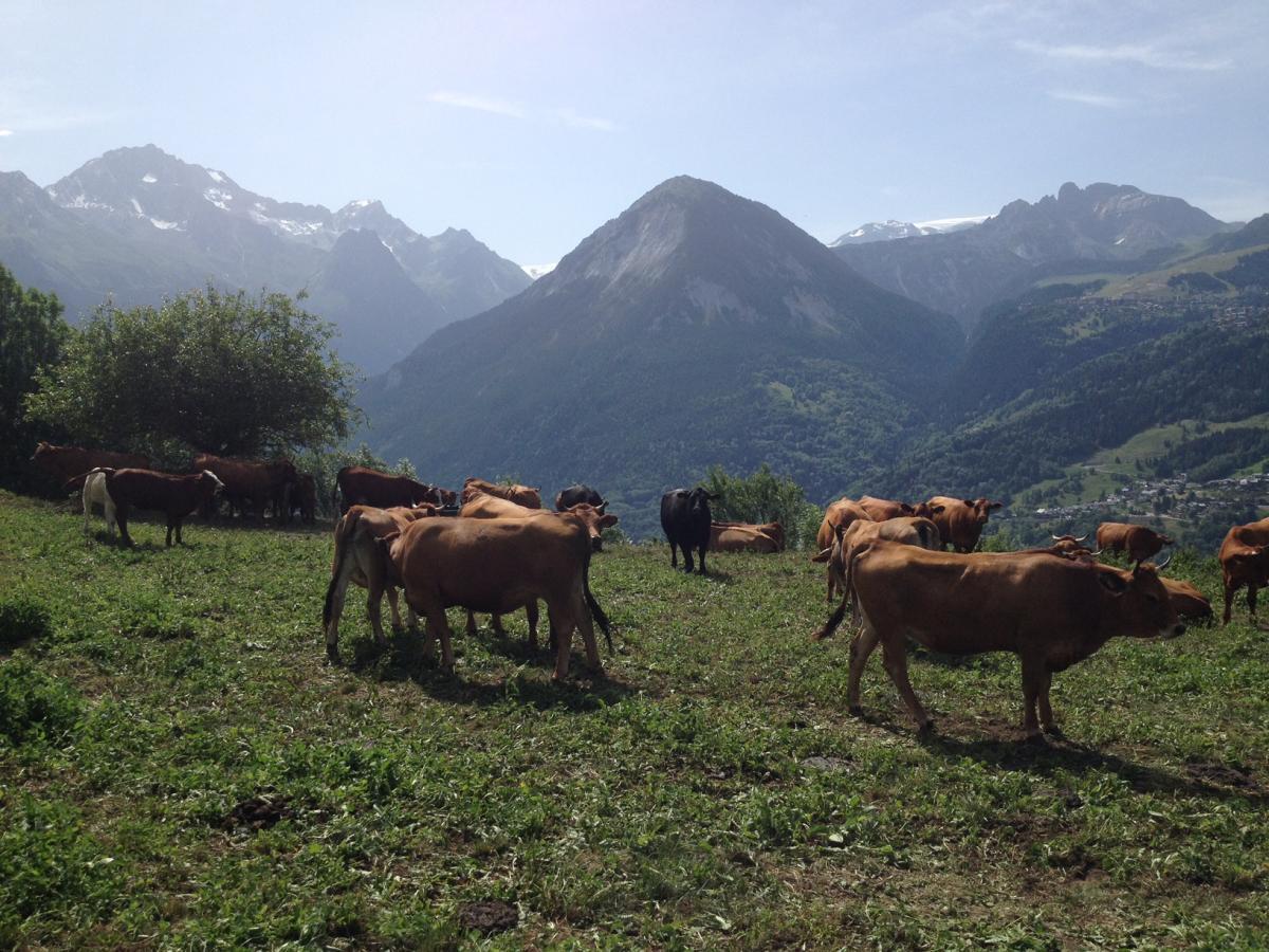 Les fromages de Savoie Mont Blanc
