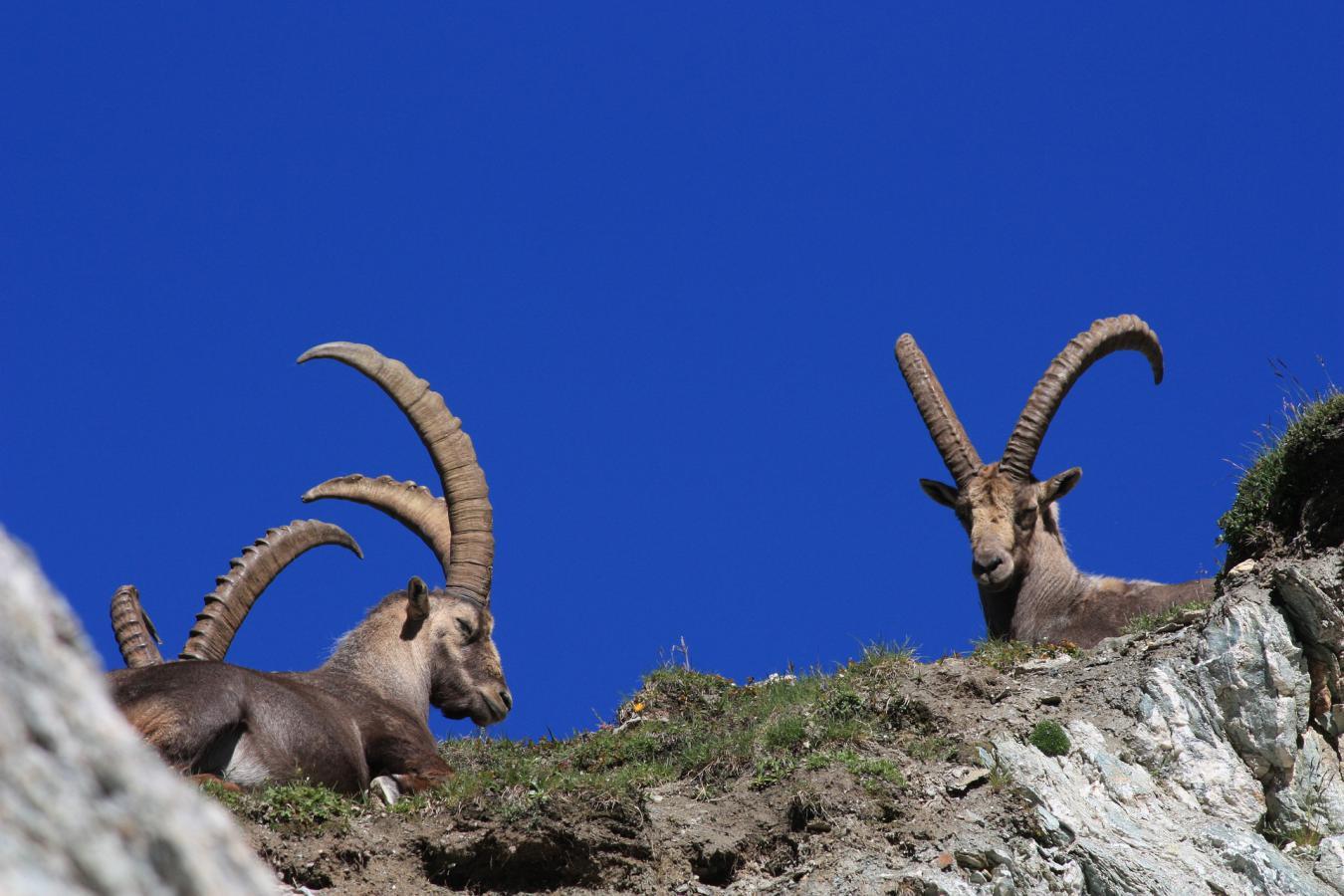 Quels sont les animaux de la montagne ?