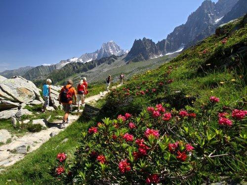 Location au ski Résidence Maeva le Chamois Blanc - Chamonix - Extérieur été